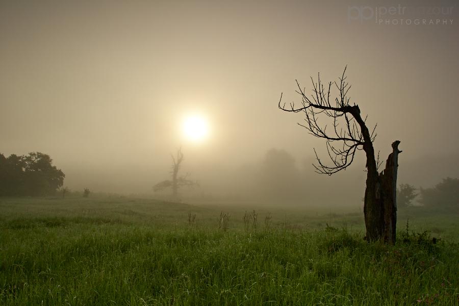 Mlhavá Pálava