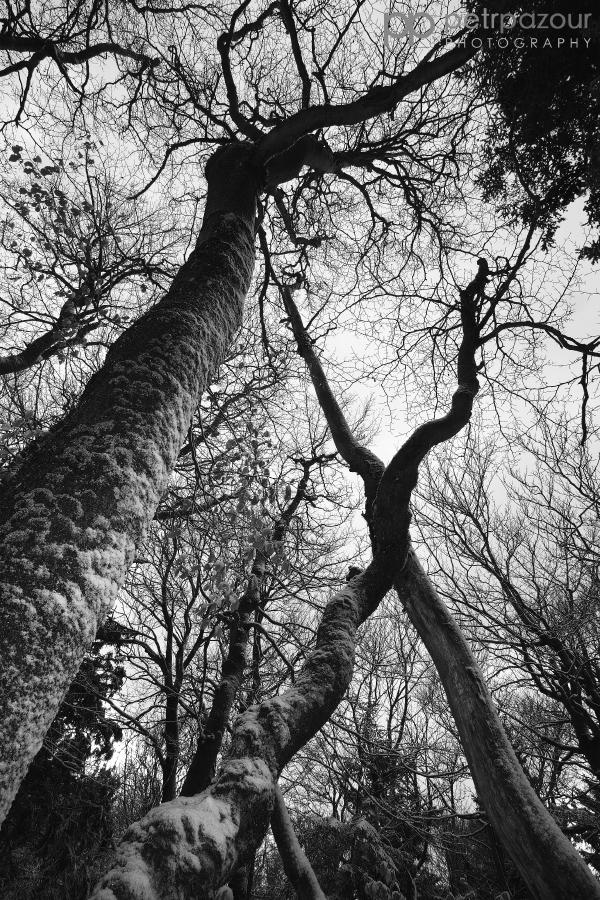 Rýchorský prales - Dvorský les