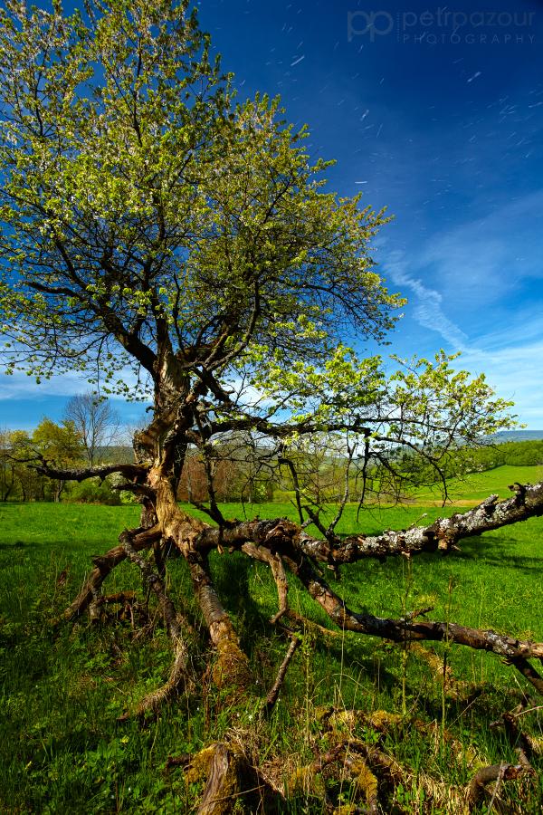 Odlétající jaro