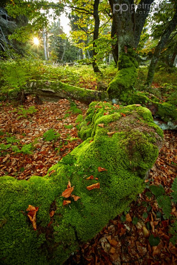 Rýchorský prales a první sluneční paprsky