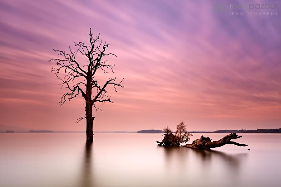 Poslední strom