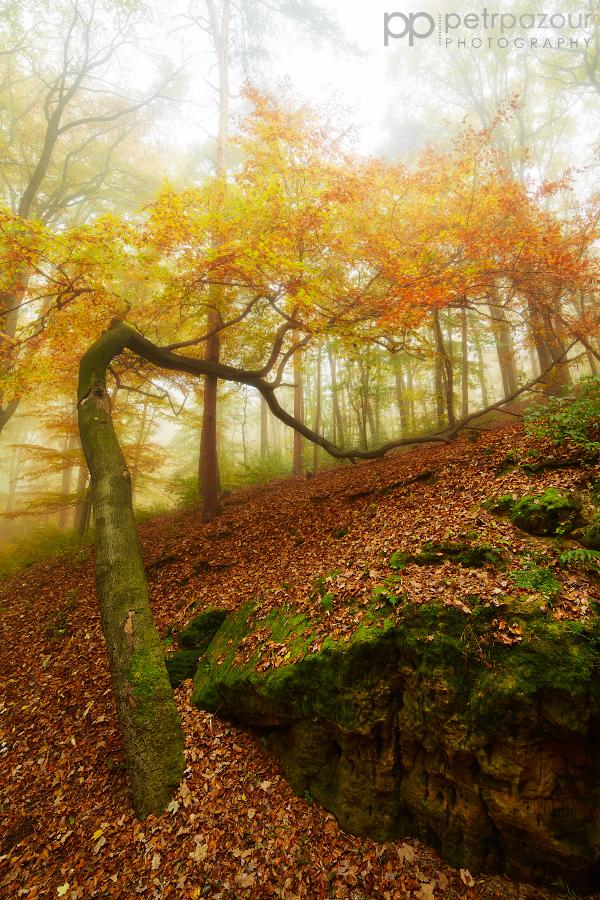 Podzimní oblouk