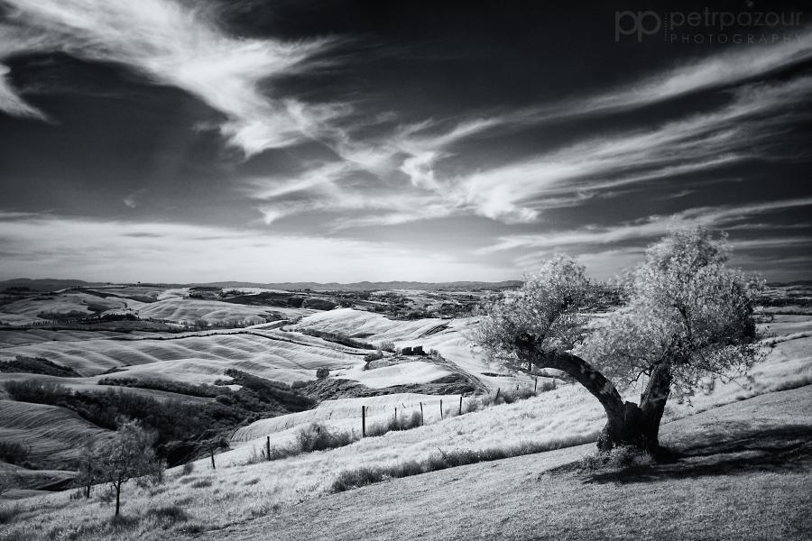 Olivovník a údolí