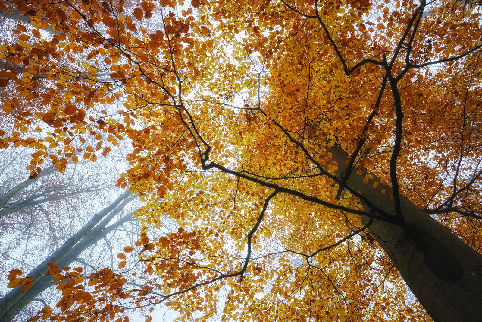 Podzimní Obora Hvězda